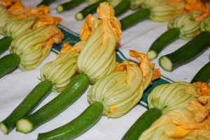 Picture of Squash Blossoms
