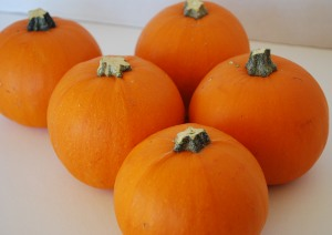 Picture of Miniature Pumpkins