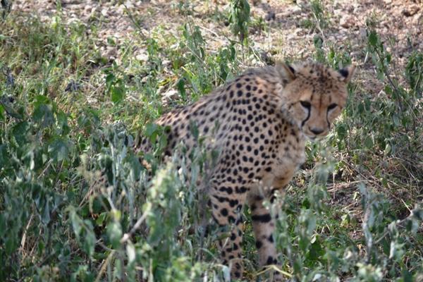 Tanzania 062