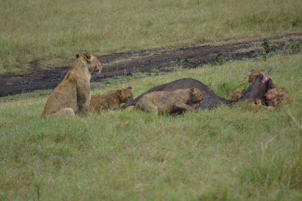Tanzania 097