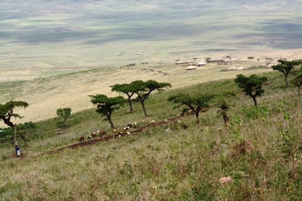 Tanzania 146
