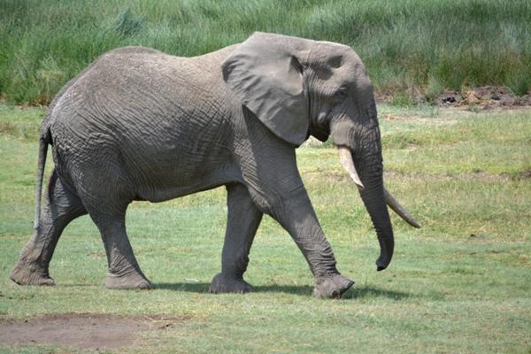 Tanzania 199