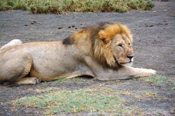 Tanzania 246