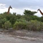 Tanzania Day 6