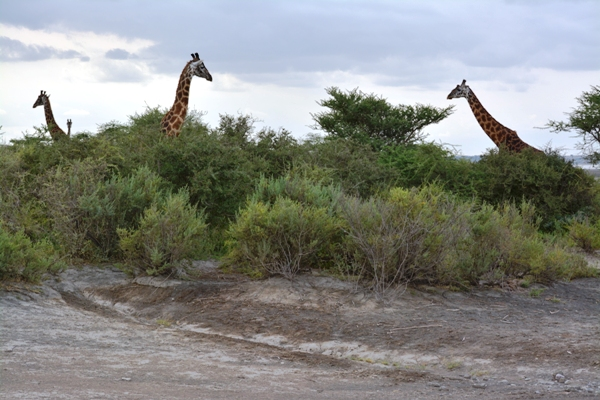 Tanzania 445